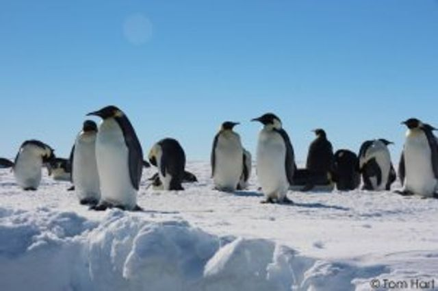 Penguins and polynias featured image