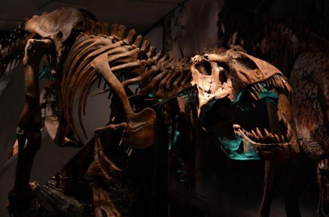 Dining on dinosaur featured image