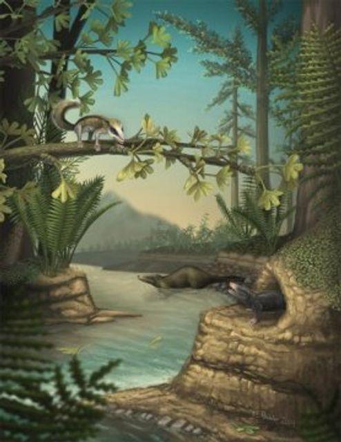 Jurassic Mammals featured image