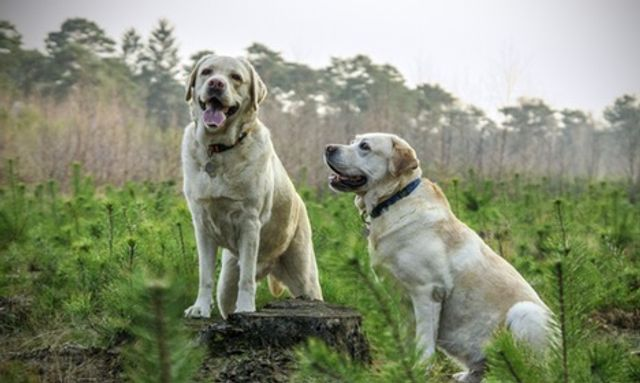 Should dogs be mentioned in divorce settlements ? featured image