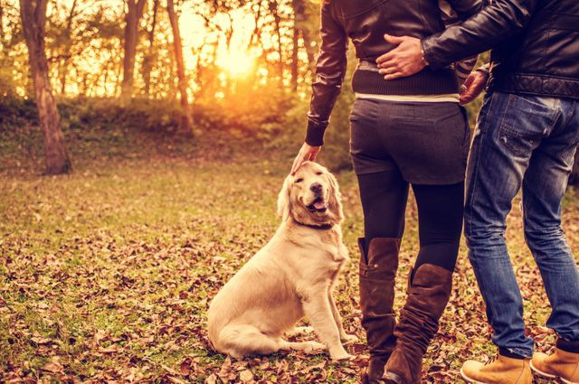 In a first, Alaska divorce courts will now treat pets more like children featured image