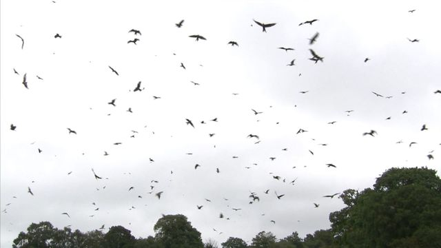 Like Red Kites, InsurTech is Thriving featured image