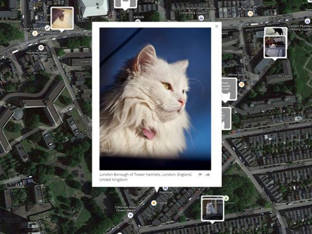 I know where your cat lives featured image