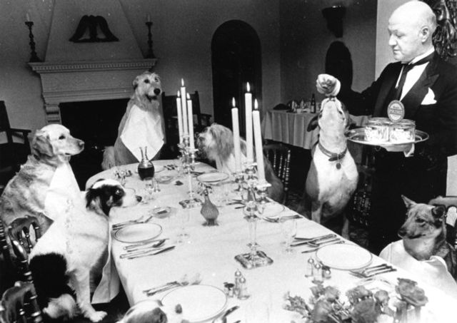 Three course dindins... featured image