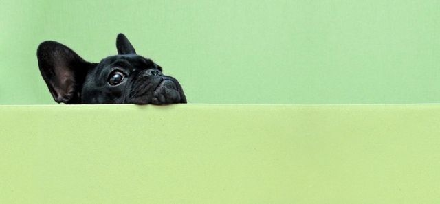 Do you have a dog friendly office? Meet the World's Greatest Office Dog featured image