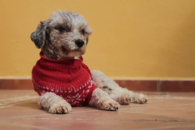 Loyalty Scheme and Click and Collect Success for Pets at Home featured image