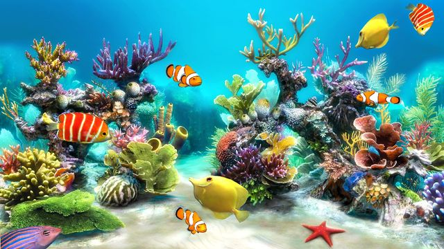 Does Your Office Need an Aquarium? featured image