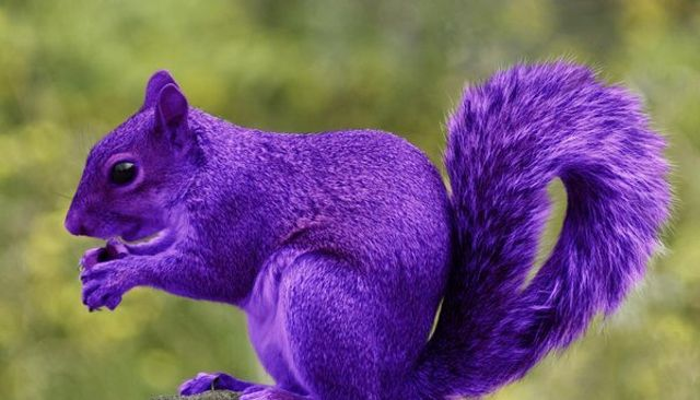 Looking for Purple Squirrels featured image