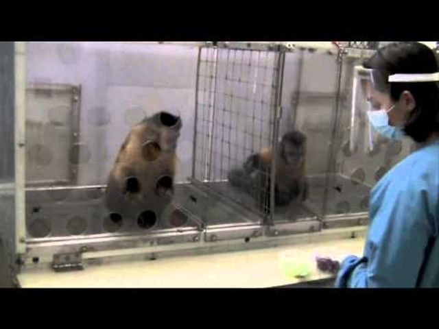 Monkeys won't work for unequal pay. featured image