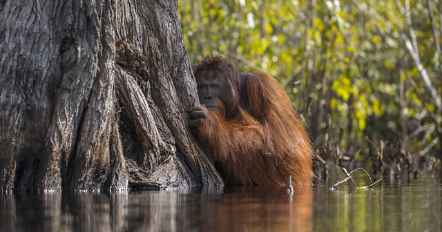 Moving works from Nat Geo Nature Photographer of the Year Contest 2017 featured image