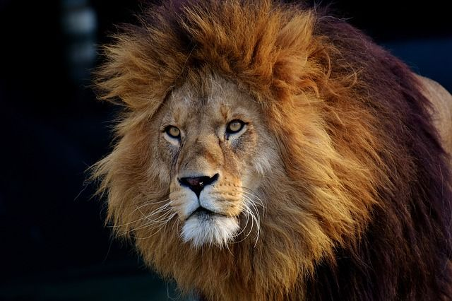 MoneyLion Plus Takes An Innovative Approach to Encourage New Investors to Save featured image