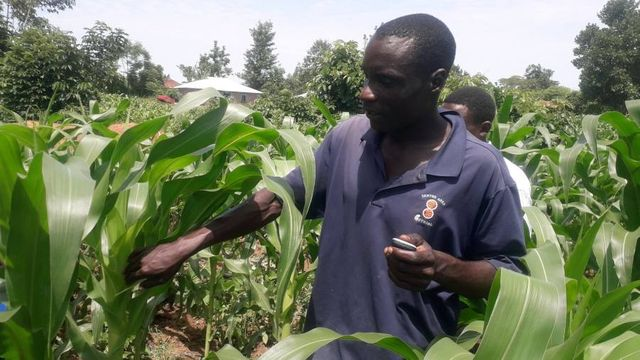 Technology hope for African farmers featured image