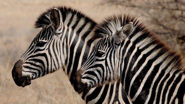 The Zebra raises $38.5M as the insurance marketplace race heats up featured image