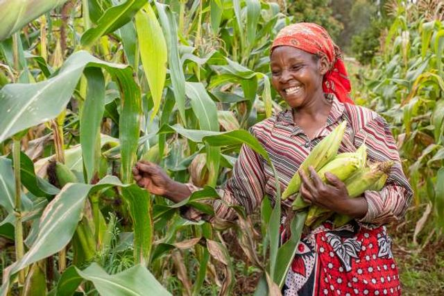 Kenya's Apollo Agriculture raises $6m Series A led by Anthemis featured image