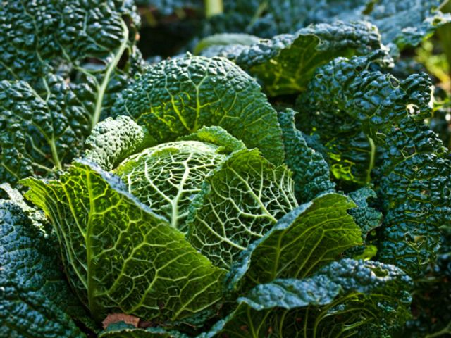 Amex acquires SoftBank-backed Kabbage after tough 2020 for the SMB lender featured image