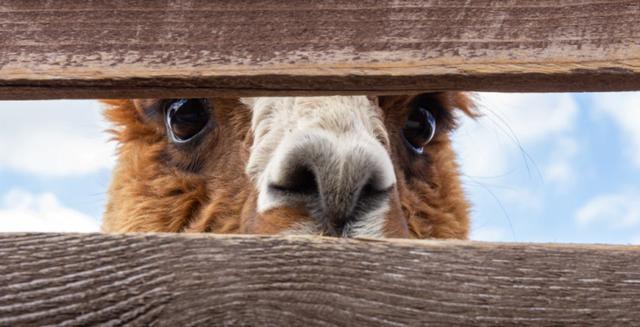 Alpaca raises $10m in Series A funding featured image