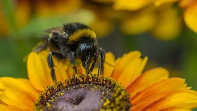 Pollinate raised $50m in Series C funding featured image