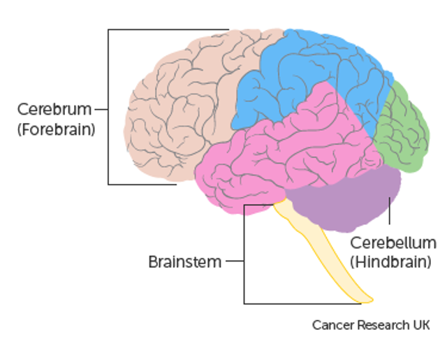 New NICE Guidelines for Brain Tumours - will outcomes be improved? featured image
