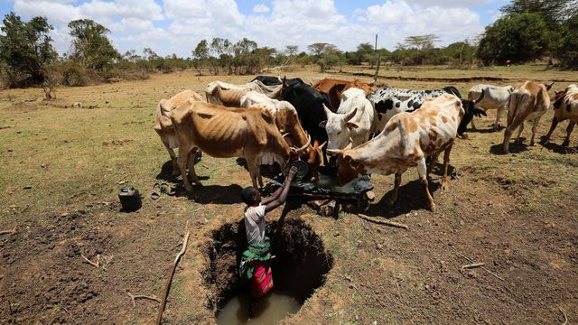 'Smart' insurance helps poor farmers to cut risk featured image