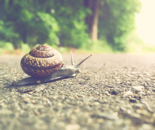 Put skates on the snail... featured image
