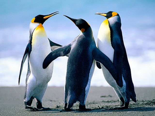 Penguins: new lessons to be learned about the importance of mediation featured image