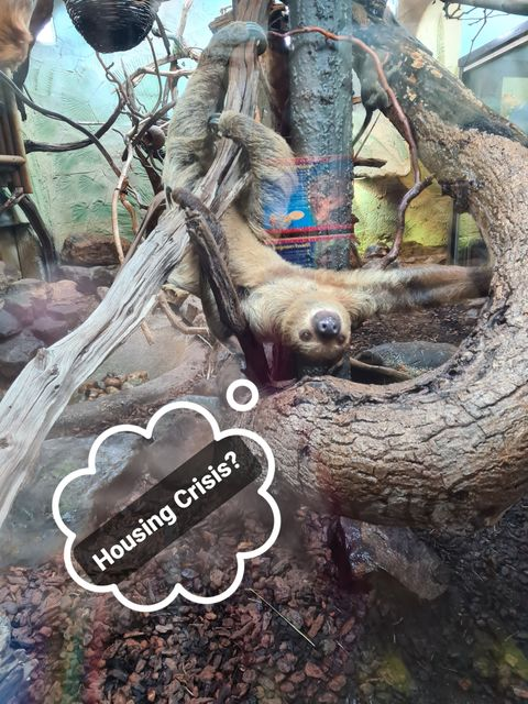 Build Back Beaver: Has the Government's planning agenda gone from 'radical reform' to sloth? featured image