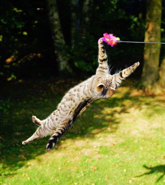 Room to swing a cat: the challenges and controversies of virtual planning committees featured image