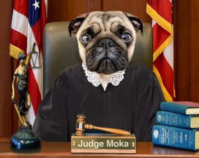 Do you need a 'pet-nuptial agreement' featured image