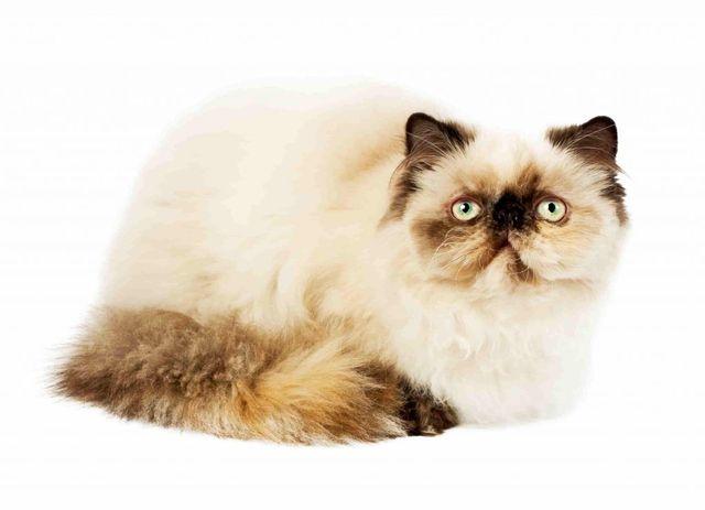 Karl Lagerfeld's Cat Set To Inherit £150 Million featured image