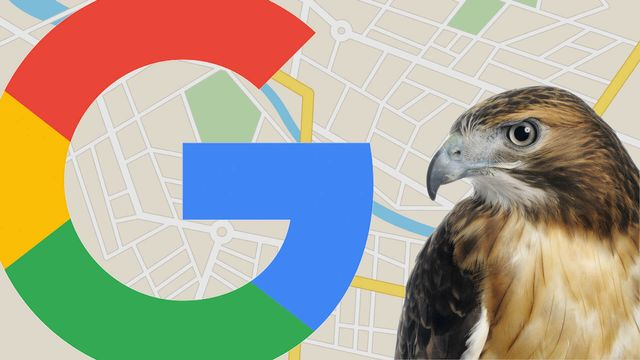 August 22, 2017: The day the 'Hawk' Google local algorithm update swooped in featured image