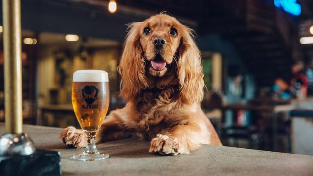 'Pawternity leave' - firms with unusual staff benefits featured image