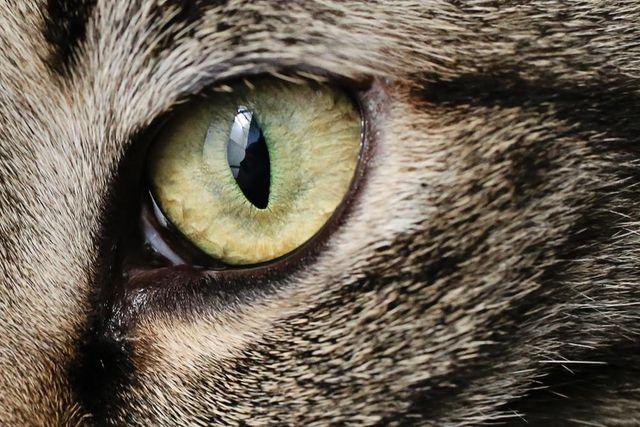CAT Bonds Gain in Popularity in the Alternative Capital Space featured image