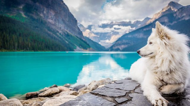 New Accelerator Is Looking For The Next Generation Of Tech For Pets featured image