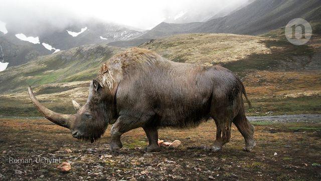 Big data little help in megafauna mysteries featured image