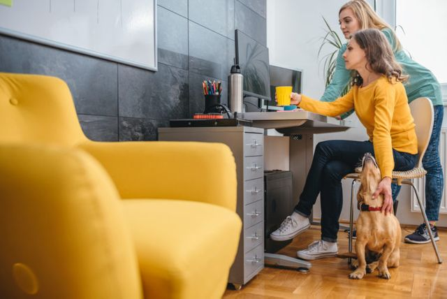 UK pet owners are kitting out their office space to accommodate their four-legged companions, accord featured image