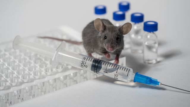 Big data can make lab-mice studies more relevant to humans featured image