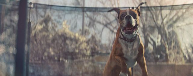 Why are the John Lewis Christmas adverts so successful? featured image