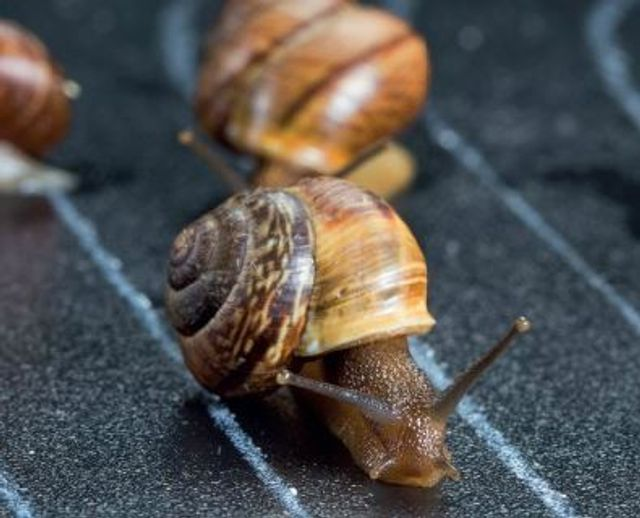 Innovation at a snail's pace featured image