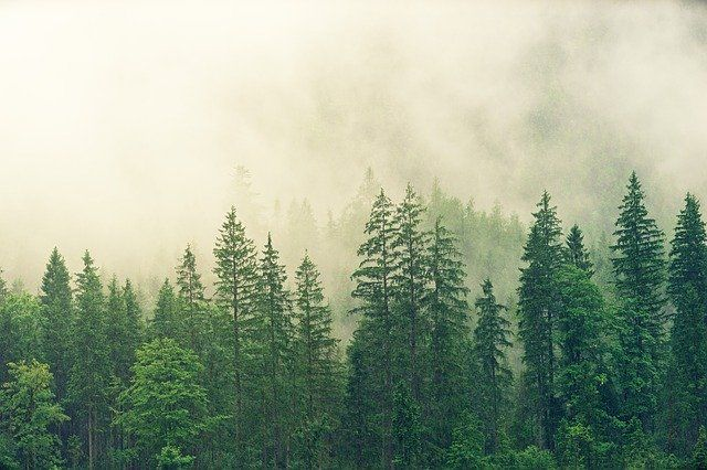 Sustainable due diligence? A look at the UK's new deforestation consultation featured image