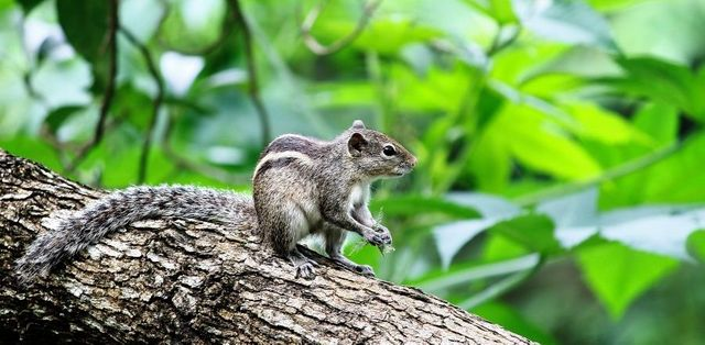 Not looking for the Purple Squirrel...... featured image