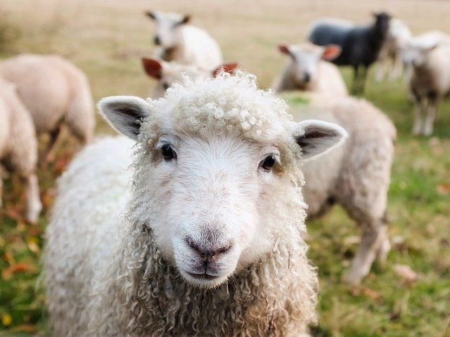 Scotland introduces amendment to protecting livestock law featured image