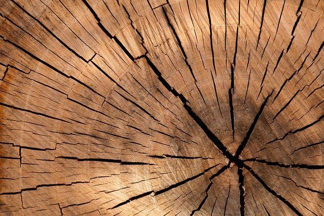 Largest UK family-owned timber group tops £225m turnover featured image