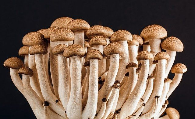 Bradford manufacturer boosts mushroom production with 200,000 plastic bottles featured image