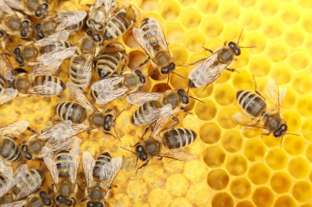 The Economics of Biodiversity: the Dasgupta Review featured image
