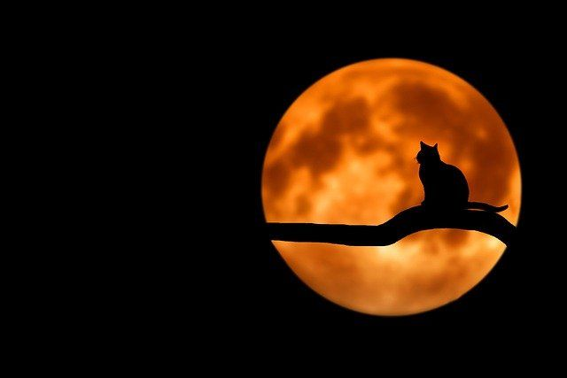 Schrödinger's COVID revisited: Once in a blue moon? featured image