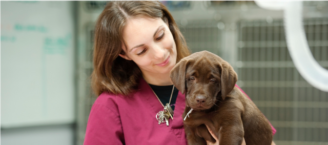 Pet Insurance NPS tops 80% and rising featured image