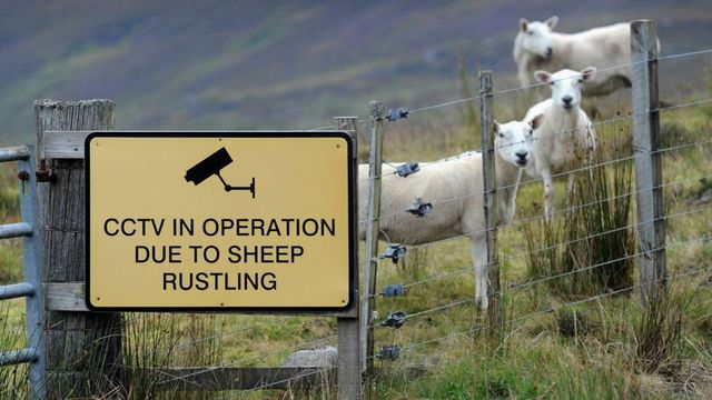 UK rural crime hits eight-year high as organised gangs target farms featured image
