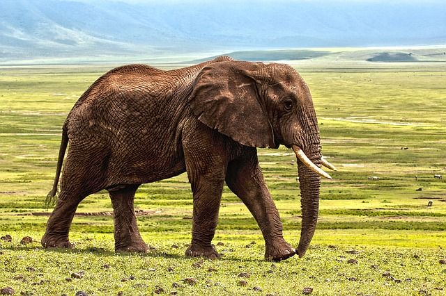 Wildlife Trafficking – Elephants, Rhinos and Pangolins – OH MY! featured image