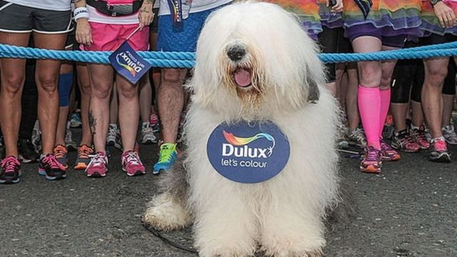 Dulux owner wins court victory in shareholder battle featured image