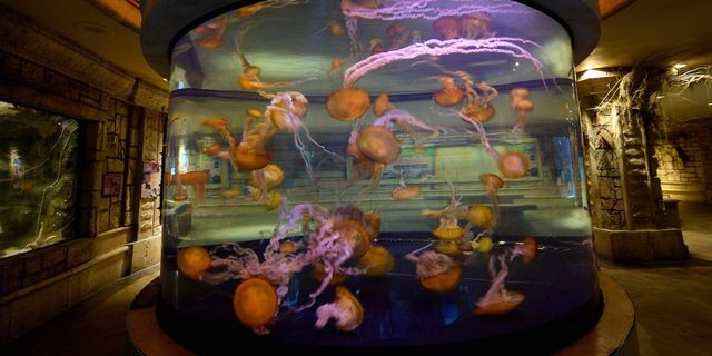 What do GDPR and a Fish Tank Have in Common? featured image